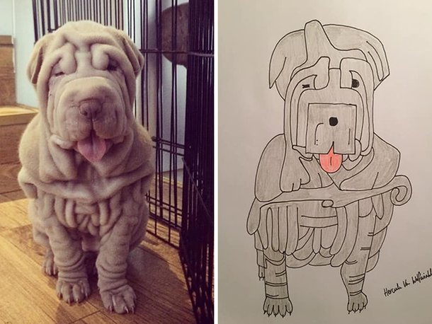 (Fuente: Retratos de mascotas de Hercules / Facebook)